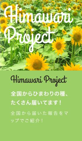 ひまわりプロジェクト